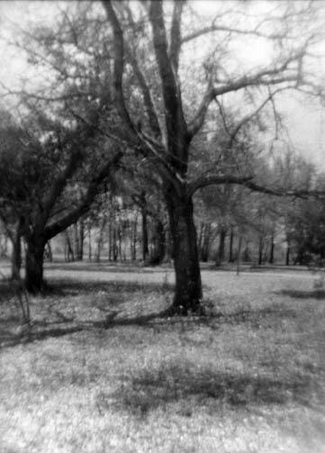 treesbanksst