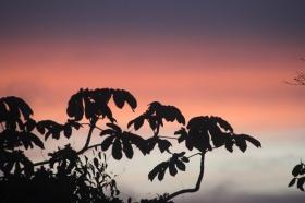 leavessunset