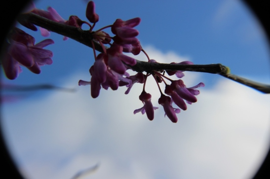Branch, Buds and Sky