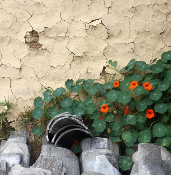 Wall textures, flowers and Shingles
