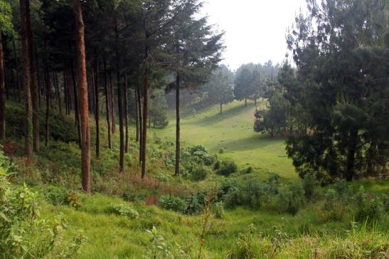 Mountain Valley El Pital