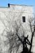 Tree Shadow on Wall, Greenville, NC by Regina Canas
