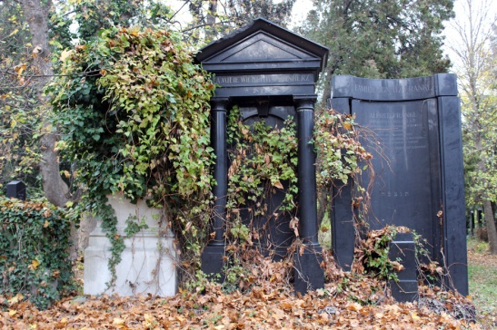Ivy Covered Graves in old Jewish Cemetery