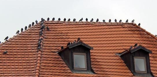 birdsroof, Prague