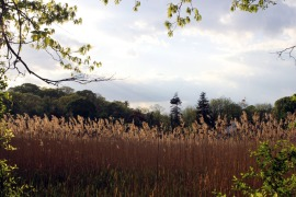 goldencattails