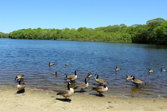 Miller's Pond, Smithtown, New York
